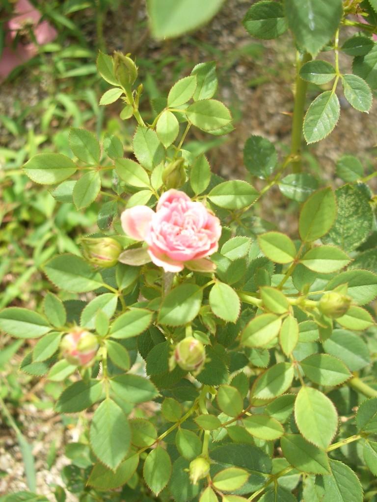 アロマサロン造花