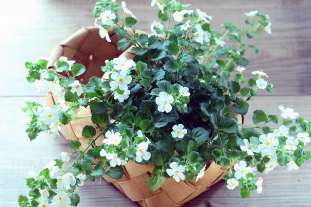 エステサロン開業植物